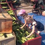 Children help prepare sweetcorn for the Sweetcorn Festival